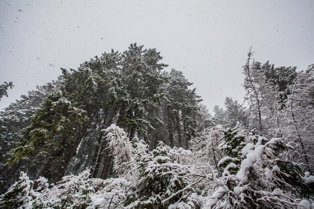 Ulten-Weihnachten-6