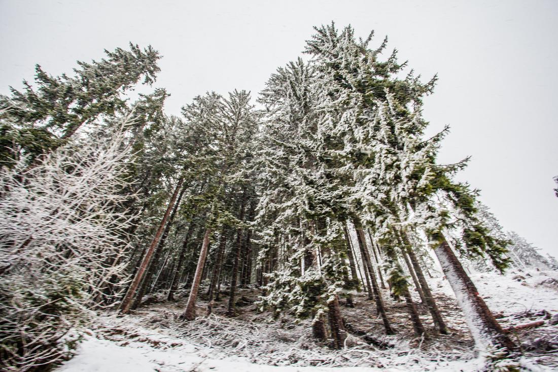 Ulten-Weihnachten-9